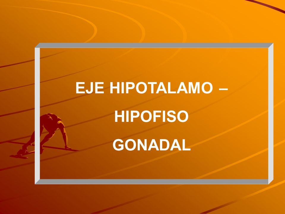 EJE HIPOTALAMO – HIPOFISARIO - GONADAL TESTOSTERONA Metabolismo proteico muscular: en el músculo esquelético es el principal andrógeno Función sexual Función cognitiva Eritropoyesis Nivel de lípidos en sangre Metabolismo óseos, entre otros Acciones: