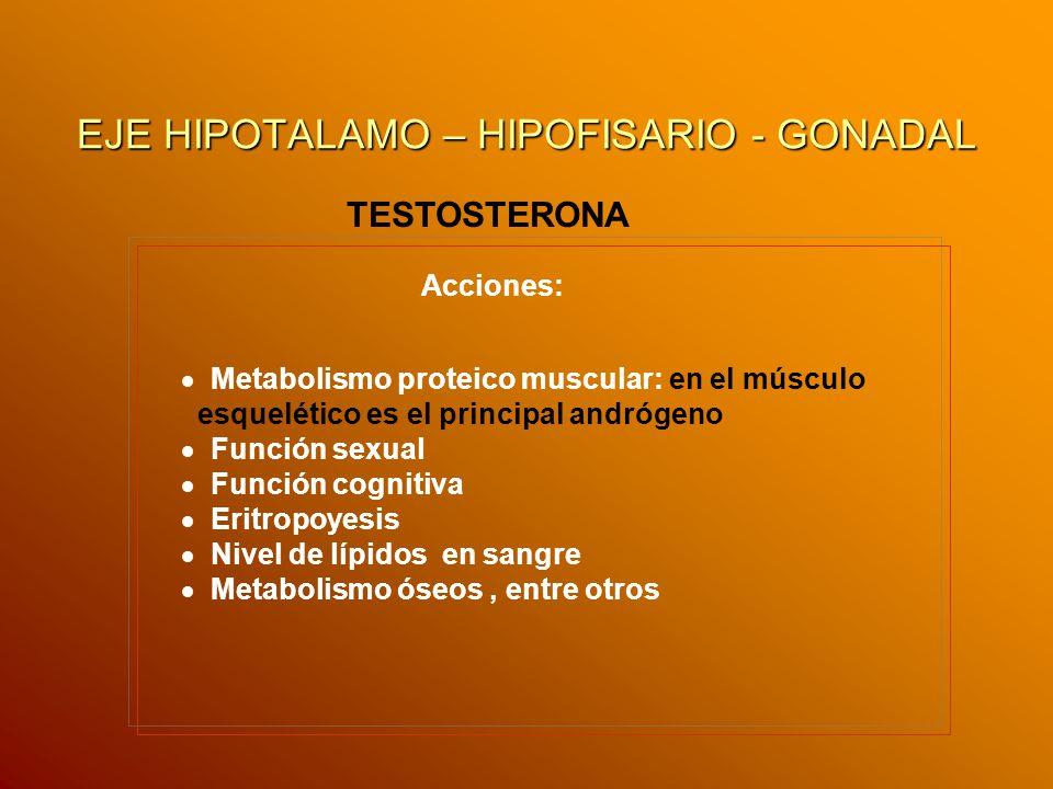 EJE HIPOTALAMO – HIPOFISARIO - GONADAL TESTOSTERONA Metabolismo proteico muscular: en el músculo esquelético es el principal andrógeno Función sexual