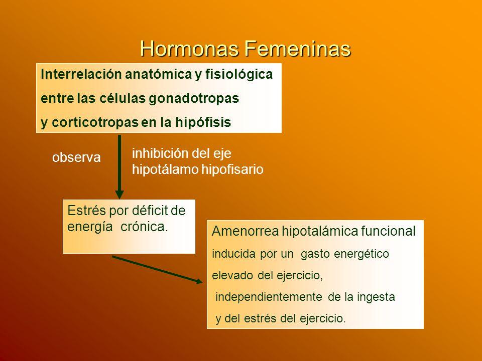 Hormonas Femeninas Mujeres en entrenamiento con ingesta disminuida Frecuencia de los pulsos de LH disminuían Aumentos en los niveles cortisol, Disminución de los índices metabólico IGF - 1 GH, Glucemia (pasando cetogenesis) Disminución del nivel de la insulina.