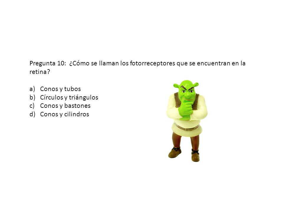 Pregunta 10: ¿Cómo se llaman los fotorreceptores que se encuentran en la retina? a)Conos y tubos b)Círculos y triángulos c)Conos y bastones d)Conos y