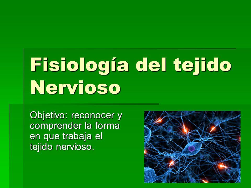 Fisiología del tejido Nervioso Objetivo: reconocer y comprender la forma en que trabaja el tejido nervioso.