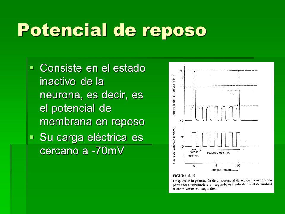 Potencial de reposo Consiste en el estado inactivo de la neurona, es decir, es el potencial de membrana en reposo Consiste en el estado inactivo de la