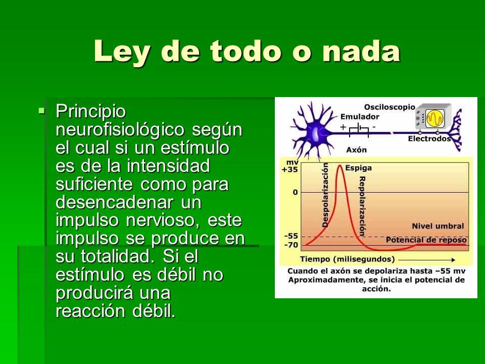 Ley de todo o nada Principio neurofisiológico según el cual si un estímulo es de la intensidad suficiente como para desencadenar un impulso nervioso,