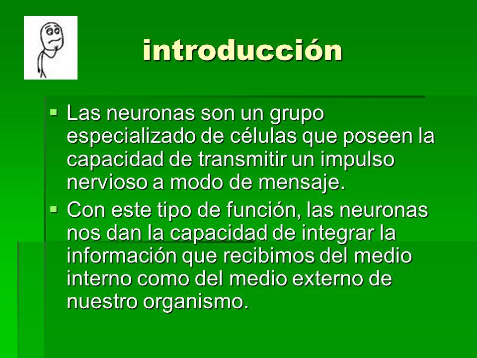 introducción Las neuronas son un grupo especializado de células que poseen la capacidad de transmitir un impulso nervioso a modo de mensaje. Las neuro