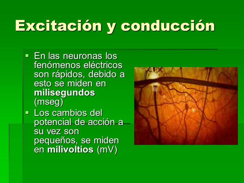 Excitación y conducción En las neuronas los fenómenos eléctricos son rápidos, debido a esto se miden en milisegundos (mseg) En las neuronas los fenóme