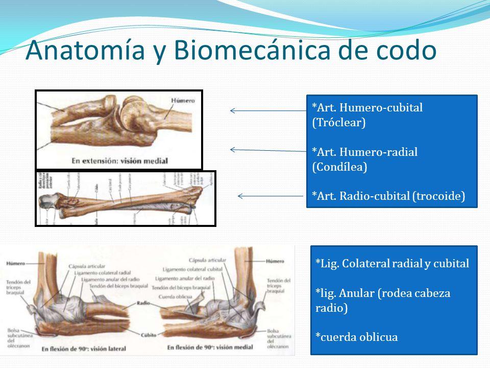 Anatomía y Biomecánica de codo *Art. Humero-cubital (Tróclear) *Art. Humero-radial (Condílea) *Art. Radio-cubital (trocoide) *Lig. Colateral radial y