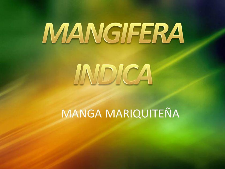 MANGA MARIQUITEÑA