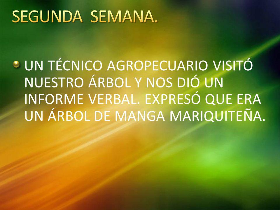 UN TÉCNICO AGROPECUARIO VISITÓ NUESTRO ÁRBOL Y NOS DIÓ UN INFORME VERBAL.