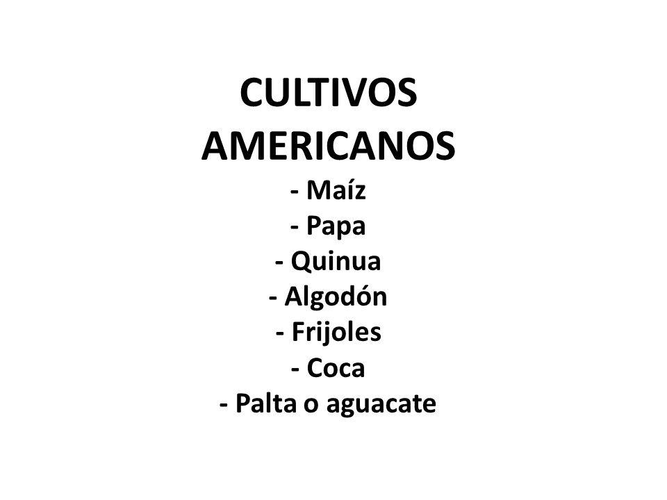CULTIVOS AMERICANOS - Maíz - Papa - Quinua - Algodón - Frijoles - Coca - Palta o aguacate