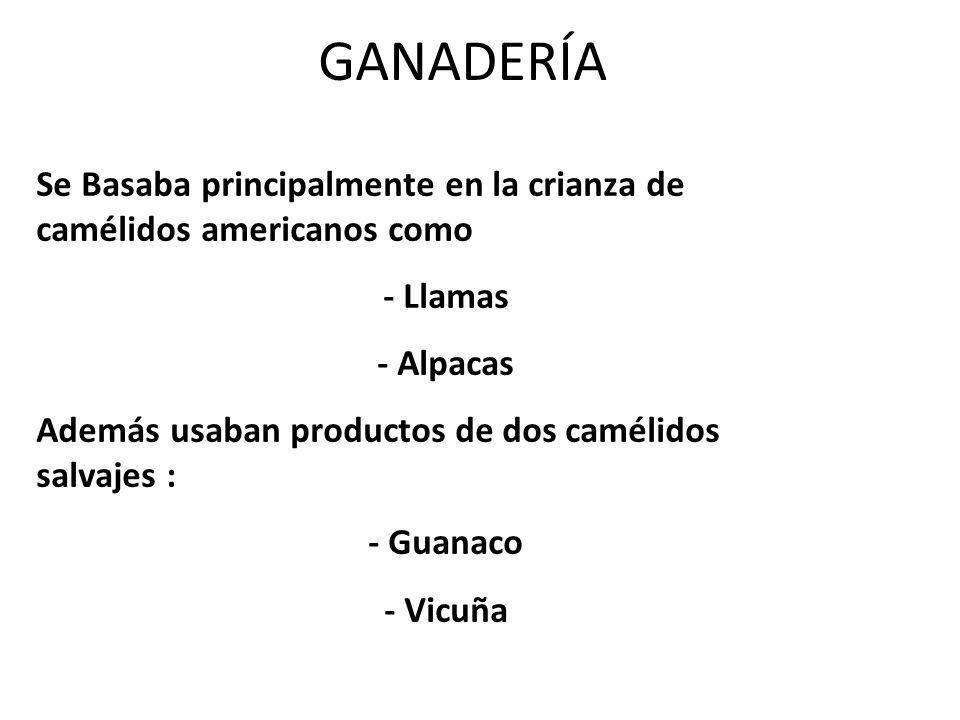 GANADERÍA Se Basaba principalmente en la crianza de camélidos americanos como - Llamas - Alpacas Además usaban productos de dos camélidos salvajes : -