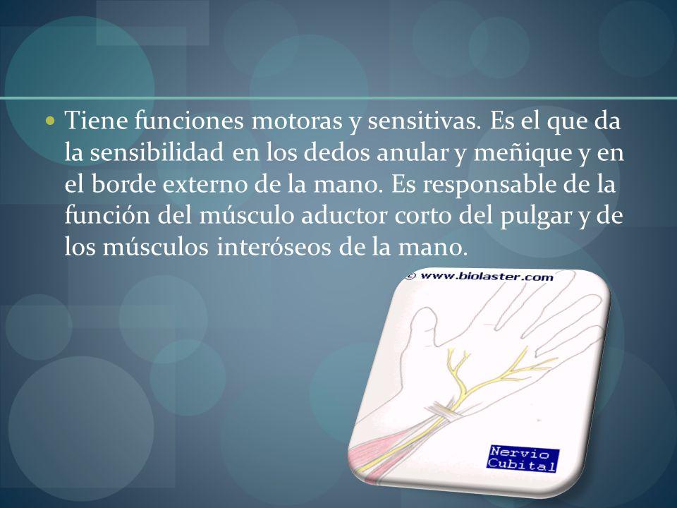 Tiene funciones motoras y sensitivas. Es el que da la sensibilidad en los dedos anular y meñique y en el borde externo de la mano. Es responsable de l
