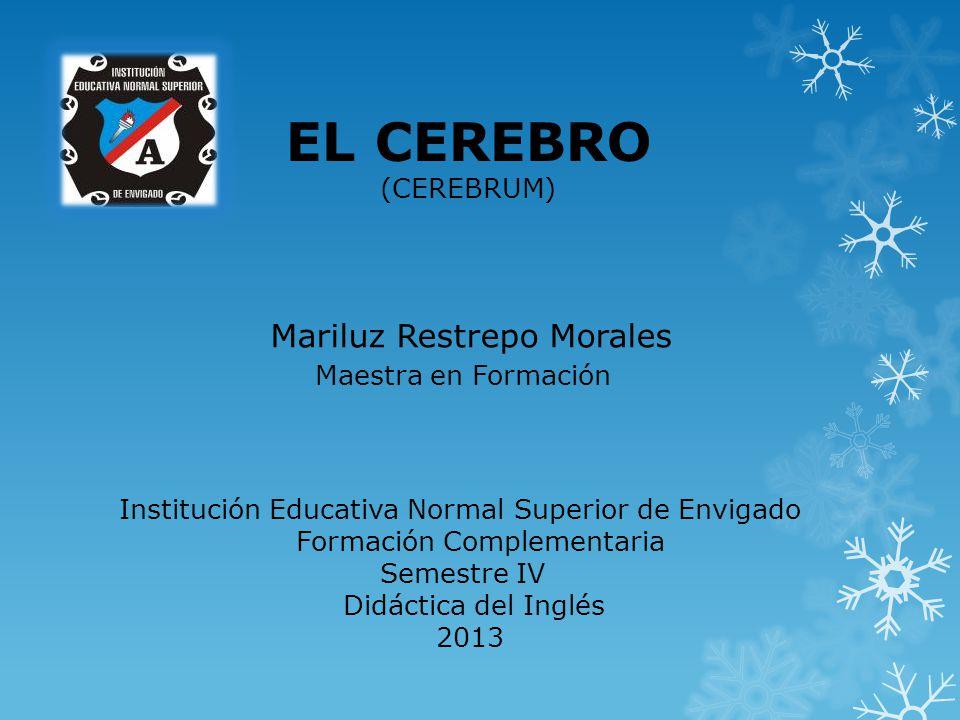 Institución Educativa Normal Superior de Envigado Formación Complementaria Semestre IV Didáctica del Inglés 2013 Mariluz Restrepo Morales Maestra en F