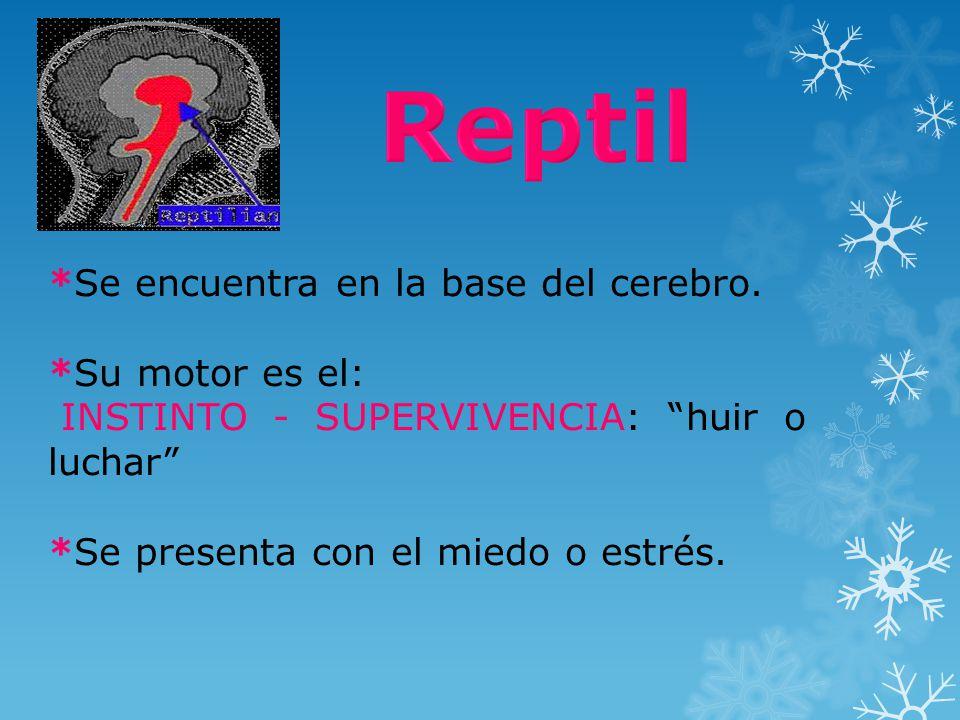 *Se encuentra en la base del cerebro. *Su motor es el: INSTINTO - SUPERVIVENCIA: huir o luchar *Se presenta con el miedo o estrés.