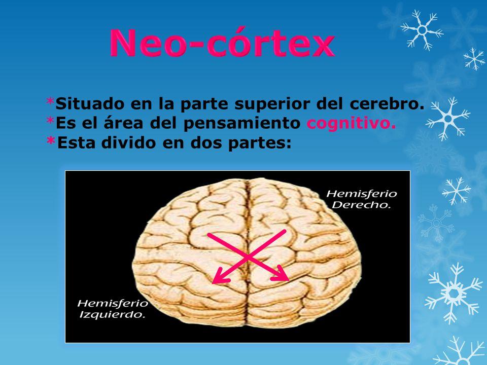 *Situado en la parte superior del cerebro. *Es el área del pensamiento cognitivo. *Esta divido en dos partes: