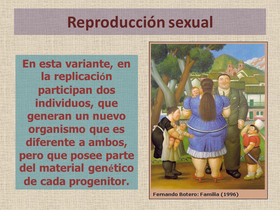 Reproducción sexual En esta variante, en la replicaci ó n participan dos individuos, que generan un nuevo organismo que es diferente a ambos, pero que