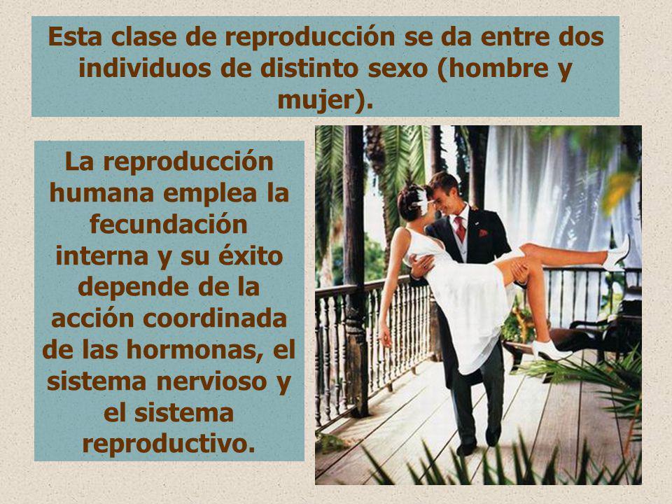 Esta clase de reproducción se da entre dos individuos de distinto sexo (hombre y mujer). La reproducción humana emplea la fecundación interna y su éxi