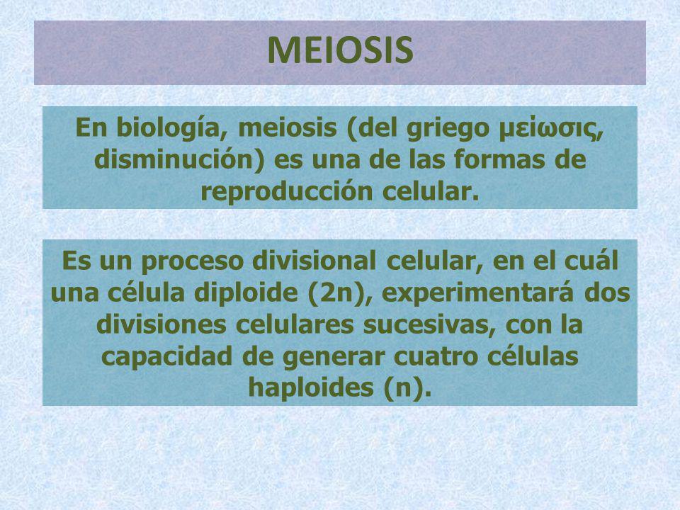 MEIOSIS En biología, meiosis (del griego μείωσις, disminución) es una de las formas de reproducción celular. Es un proceso divisional celular, en el c