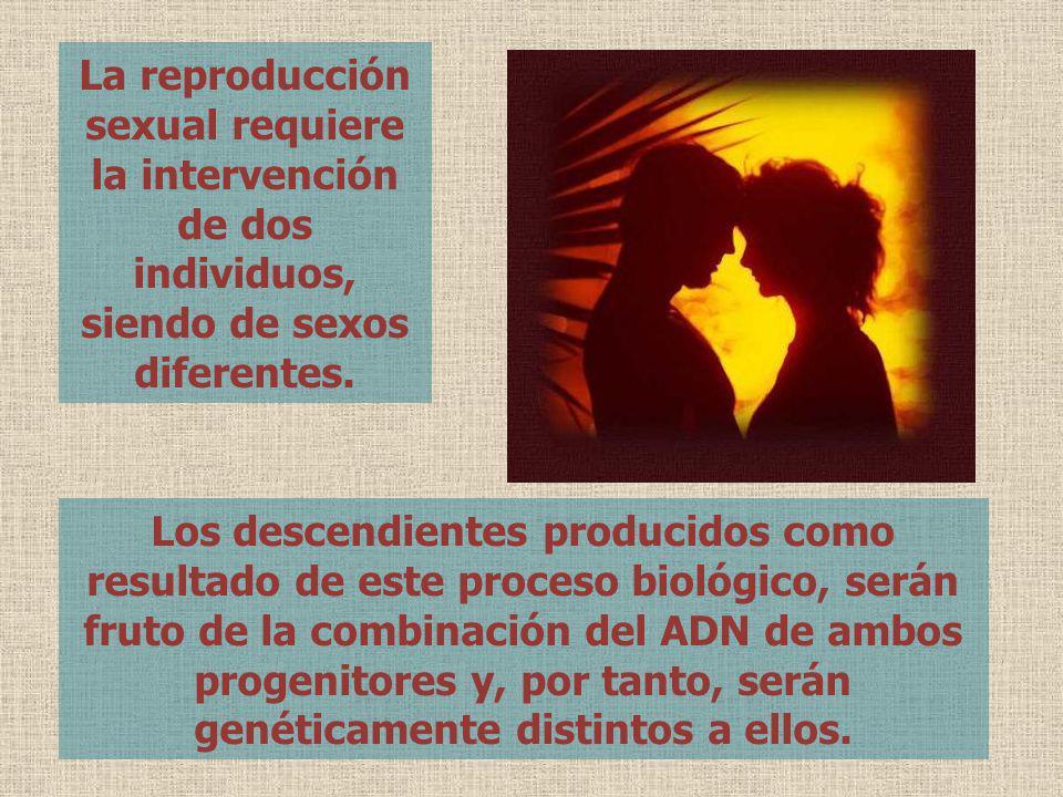 La reproducción sexual requiere la intervención de dos individuos, siendo de sexos diferentes. Los descendientes producidos como resultado de este pro