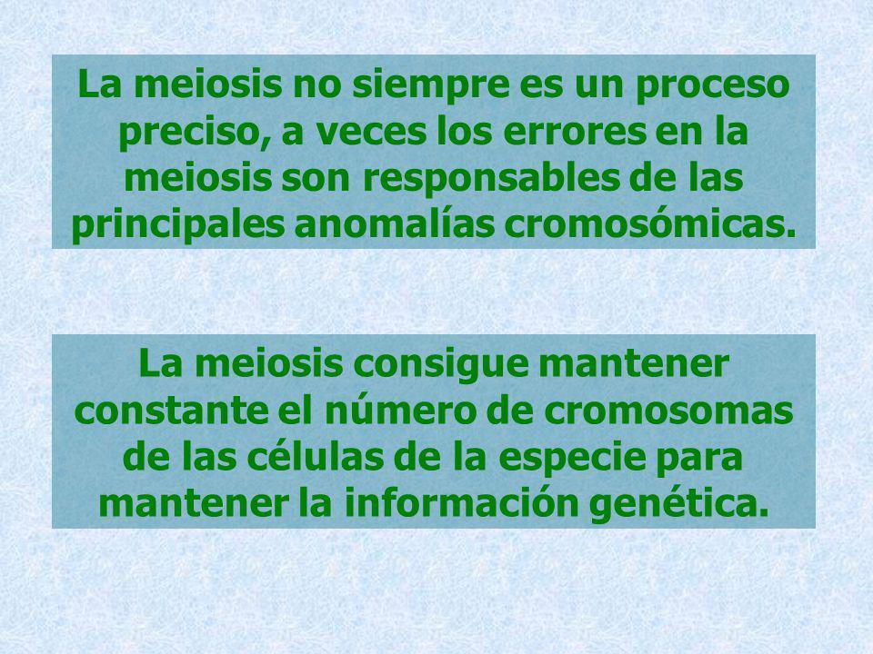 La meiosis no siempre es un proceso preciso, a veces los errores en la meiosis son responsables de las principales anomalías cromosómicas. La meiosis