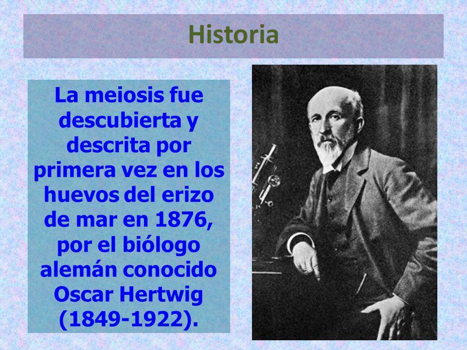 La meiosis fue descubierta y descrita por primera vez en los huevos del erizo de mar en 1876, por el biólogo alemán conocido Oscar Hertwig (1849-1922)