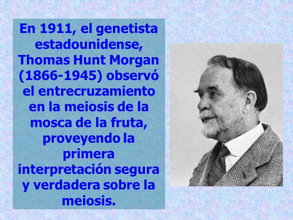 En 1911, el genetista estadounidense, Thomas Hunt Morgan (1866-1945) observó el entrecruzamiento en la meiosis de la mosca de la fruta, proveyendo la