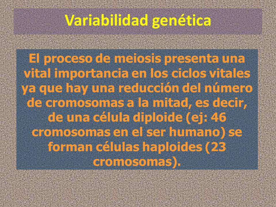 Variabilidad genética El proceso de meiosis presenta una vital importancia en los ciclos vitales ya que hay una reducción del número de cromosomas a l
