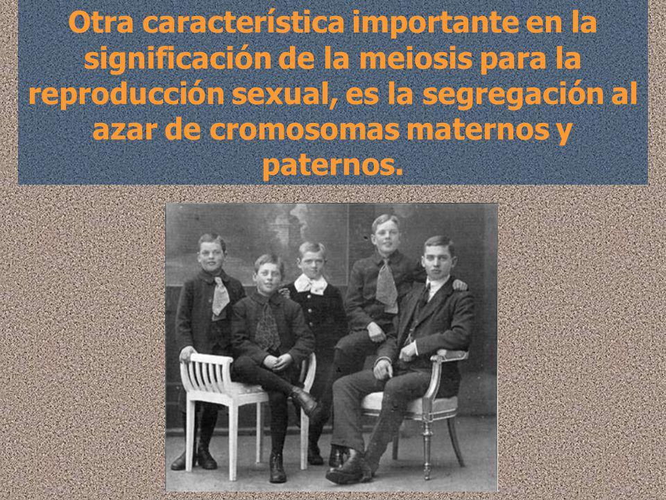 Otra característica importante en la significación de la meiosis para la reproducción sexual, es la segregación al azar de cromosomas maternos y pater