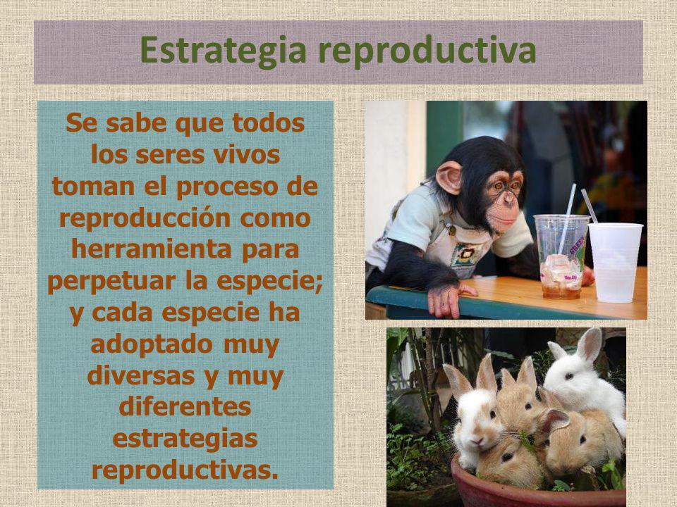 Se sabe que todos los seres vivos toman el proceso de reproducción como herramienta para perpetuar la especie; y cada especie ha adoptado muy diversas