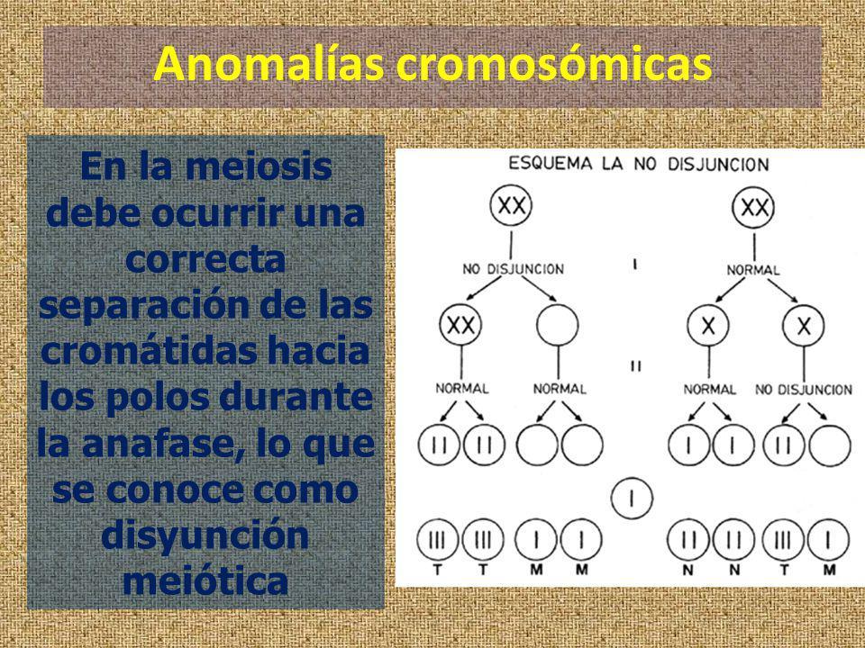 Anomalías cromosómicas En la meiosis debe ocurrir una correcta separación de las cromátidas hacia los polos durante la anafase, lo que se conoce como
