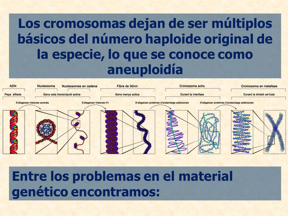 Los cromosomas dejan de ser múltiplos básicos del número haploide original de la especie, lo que se conoce como aneuploidía Entre los problemas en el