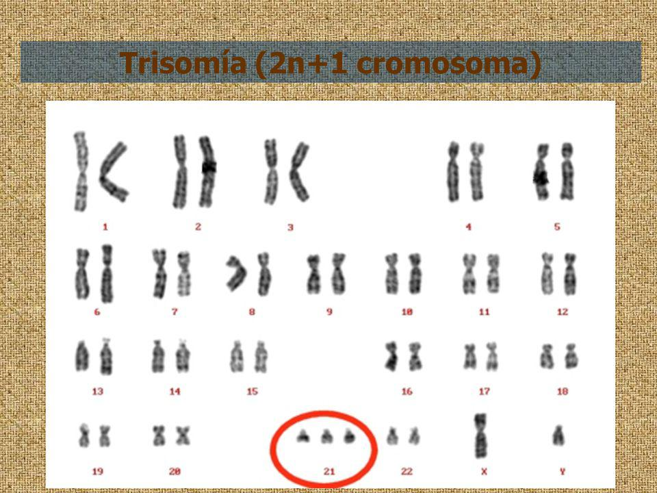 Trisomía (2n+1 cromosoma)
