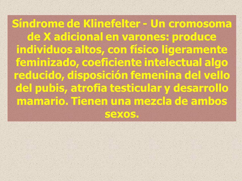 Síndrome de Klinefelter - Un cromosoma de X adicional en varones: produce individuos altos, con físico ligeramente feminizado, coeficiente intelectual