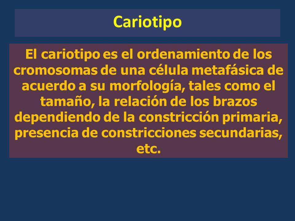 Cariotipo El cariotipo es el ordenamiento de los cromosomas de una célula metafásica de acuerdo a su morfología, tales como el tamaño, la relación de