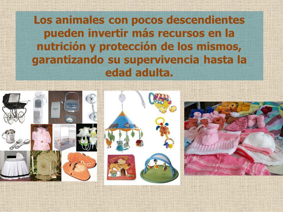 Los animales con pocos descendientes pueden invertir más recursos en la nutrición y protección de los mismos, garantizando su supervivencia hasta la e