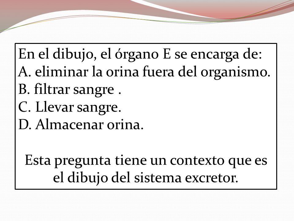 En el dibujo, el órgano E se encarga de: A. eliminar la orina fuera del organismo. B. filtrar sangre. C. Llevar sangre. D. Almacenar orina. Esta pregu