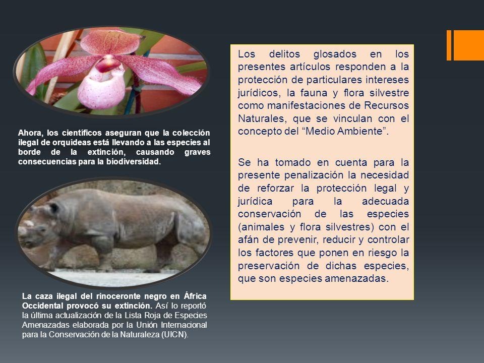 Los delitos glosados en los presentes artículos responden a la protección de particulares intereses jurídicos, la fauna y flora silvestre como manifes