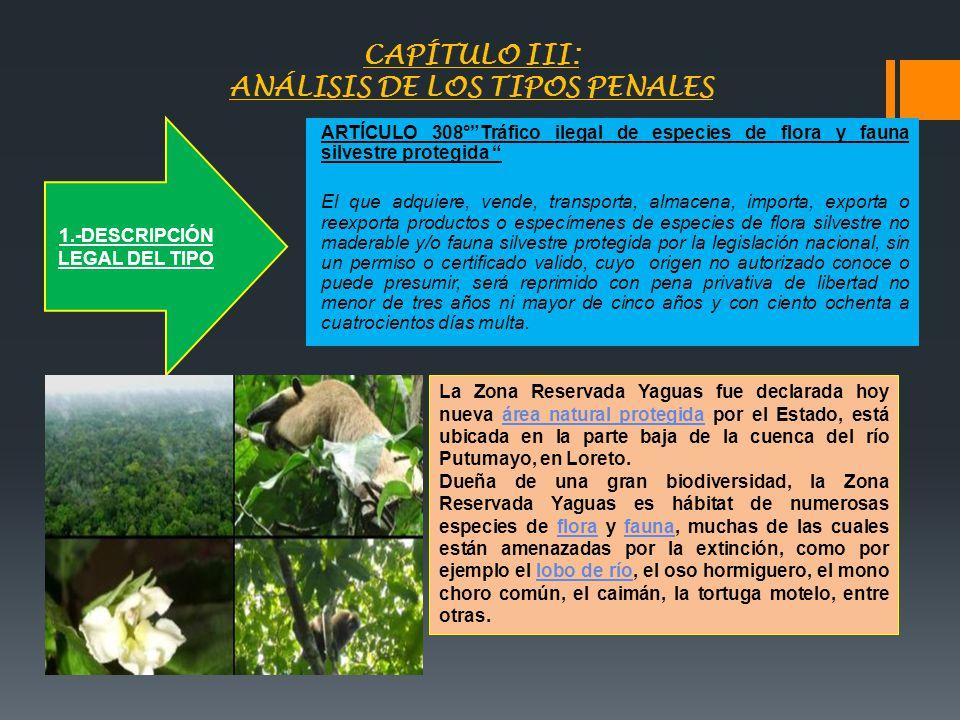 CAPÍTULO III: ANÁLISIS DE LOS TIPOS PENALES ARTÍCULO 308°Tráfico ilegal de especies de flora y fauna silvestre protegida El que adquiere, vende, trans