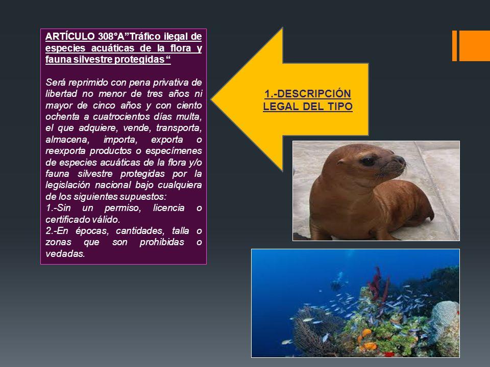ARTÍCULO 308°ATráfico ilegal de especies acuáticas de la flora y fauna silvestre protegidas Será reprimido con pena privativa de libertad no menor de