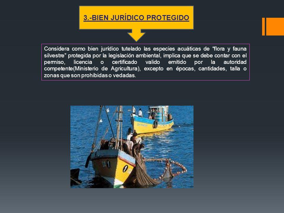 Considera como bien jurídico tutelado las especies acuáticas de flora y fauna silvestre protegida por la legislación ambiental, implica que se debe co
