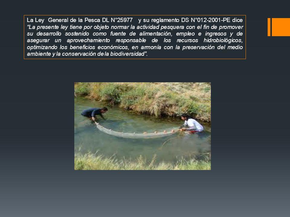 La Ley General de la Pesca DL N°25977 y su reglamento DS N°012-2001-PE dice La presente ley tiene por objeto normar la actividad pesquera con el fin d