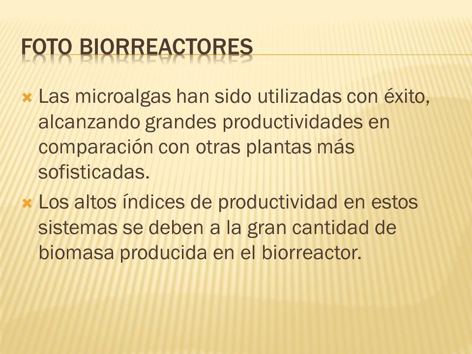 Las microalgas han sido utilizadas con éxito, alcanzando grandes productividades en comparación con otras plantas más sofisticadas. Los altos índices