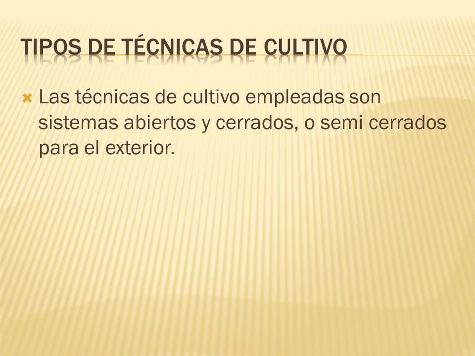 Las técnicas de cultivo empleadas son sistemas abiertos y cerrados, o semi cerrados para el exterior.