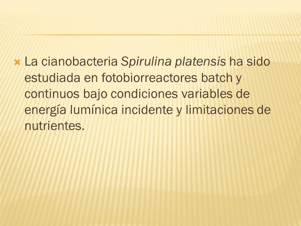 La cianobacteria Spirulina platensis ha sido estudiada en fotobiorreactores batch y continuos bajo condiciones variables de energía lumínica incidente
