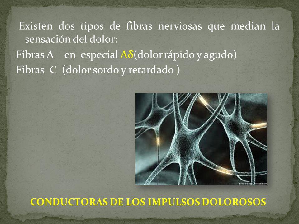 Existen dos tipos de fibras nerviosas que median la sensación del dolor: Fibras A en especial Aδ(dolor rápido y agudo) Fibras C (dolor sordo y retardado ) CONDUCTORAS DE LOS IMPULSOS DOLOROSOS