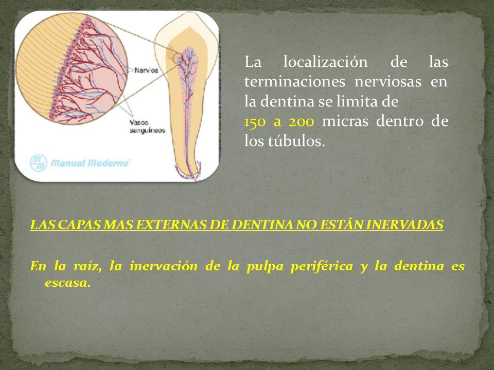LAS CAPAS MAS EXTERNAS DE DENTINA NO ESTÁN INERVADAS En la raíz, la inervación de la pulpa periférica y la dentina es escasa.