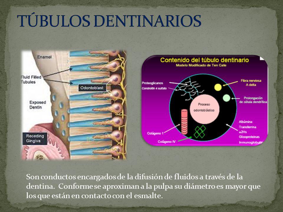 Son conductos encargados de la difusión de fluidos a través de la dentina.