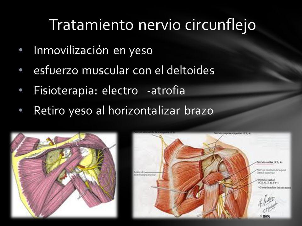 Tratamiento nervio circunflejo Inmovilización en yeso esfuerzo muscular con el deltoides Fisioterapia: electro -atrofia Retiro yeso al horizontalizar