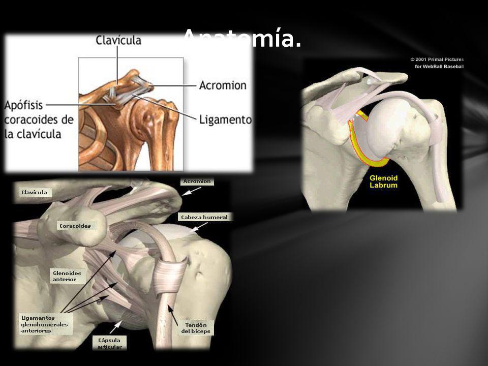 Anatomía.
