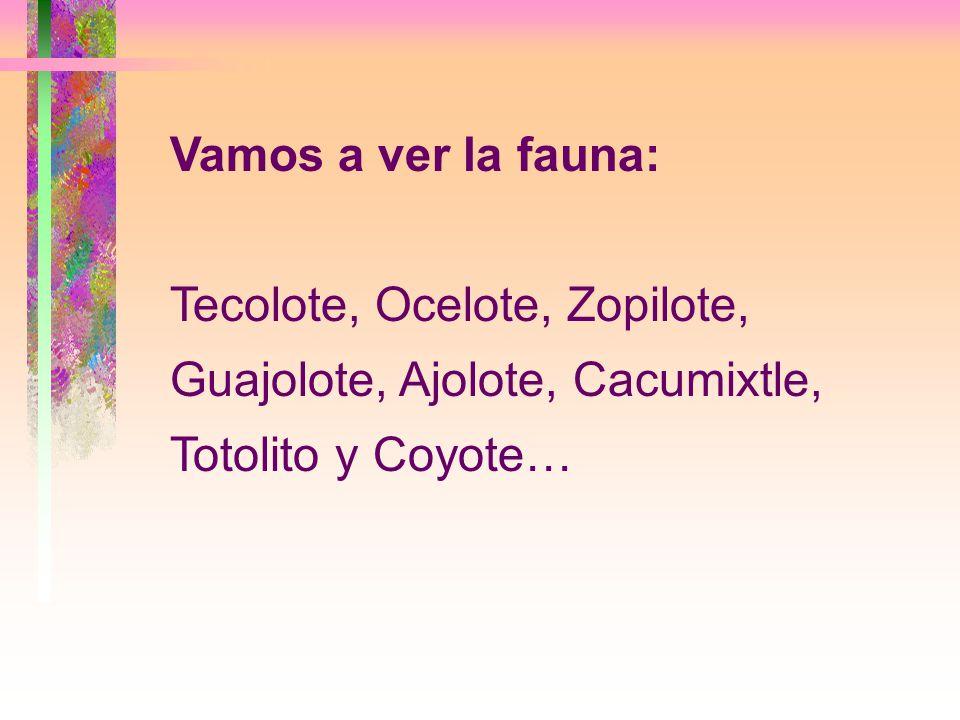 Vamos a ver la fauna: Tecolote, Ocelote, Zopilote, Guajolote, Ajolote, Cacumixtle, Totolito y Coyote…