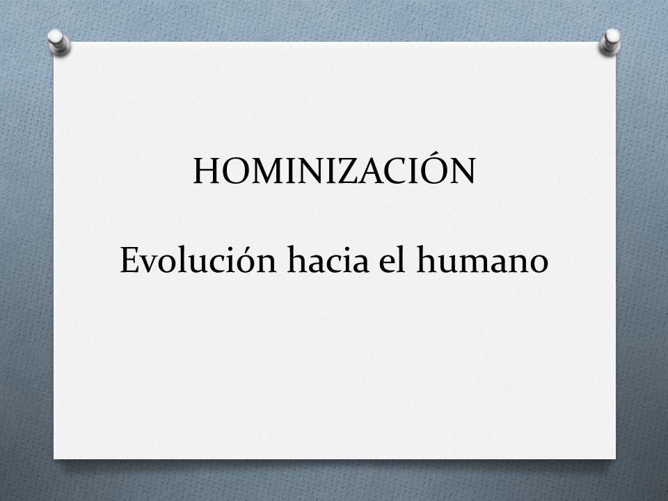 HOMINIZACIÓN Evolución hacia el humano